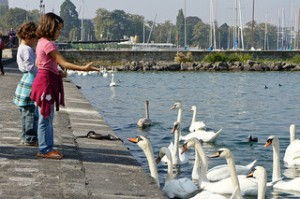Children feeding the swans on lake Geneva | O. Sidorenko